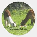 La sabiduría de la alpaca comienza en maravilla etiqueta redonda
