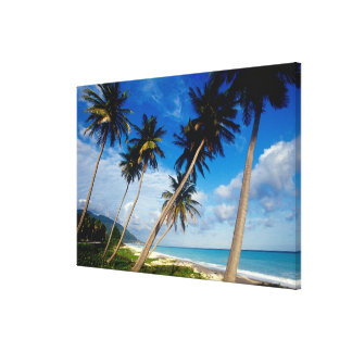 La Samana Peninsula, Dominican Republic, 2 Gallery Wrapped Canvas
