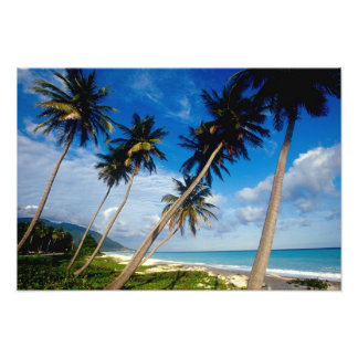 La Samana Peninsula, Dominican Republic, 2 Photo Print