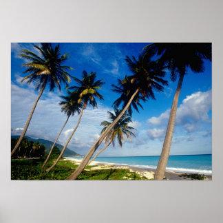 La Samana Peninsula, Dominican Republic, 2 Posters