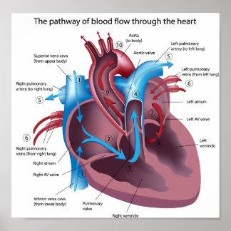 La sangre atraviesa el poster del corazón