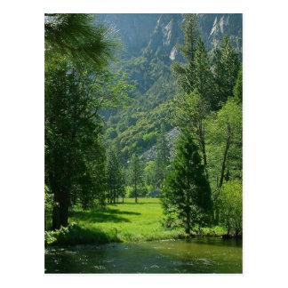 La secoya parquea verde de los árboles de las corr postal