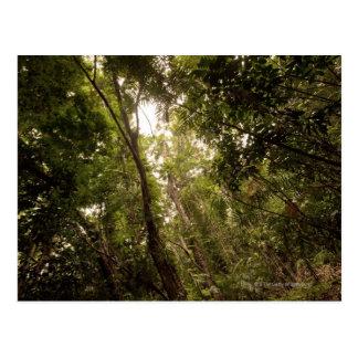 La selva tropical tropical el río de Daintree Postal