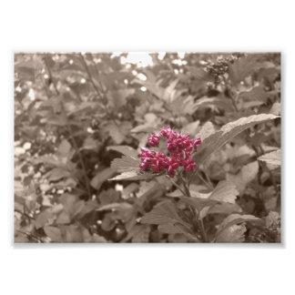 La sepia de la flor corrige la impresión cojinete