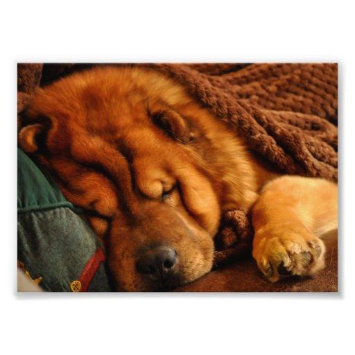 La siesta de un invierno largo….Estilo del perro c Fotografías