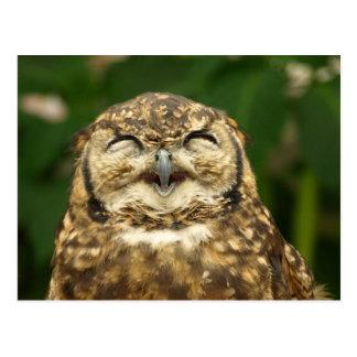 ¡la sonrisa del búho!! :) tarjetas postales