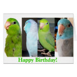 La tarjeta de felicitación del pájaro del feliz cu