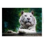La tarjeta de nota blanca del tigre (v1) personali