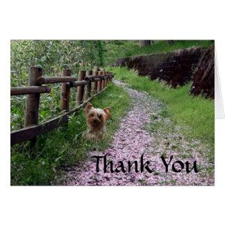 La tarjeta de Yorkshire Terrier le agradece