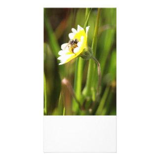 La tarjeta en blanco de la foto, manosea la abeja tarjeta personal