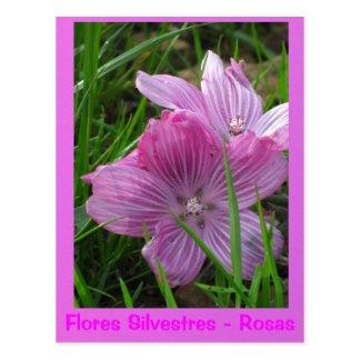 La Tarjeta Postal - Flores Silvestres - Rosas