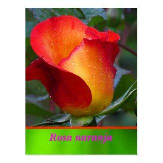 La Tarjeta Postal - Rosa naranja