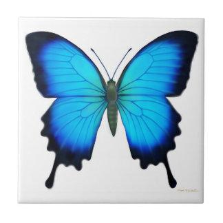 La teja de la mariposa de Papilio Ulises