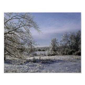 La tormenta de hielo esmalta un bosque póster