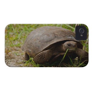 La tortuga de Gopher come el almuerzo Funda Para iPhone 4