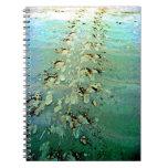 La tortuga de mar sigue el cuaderno