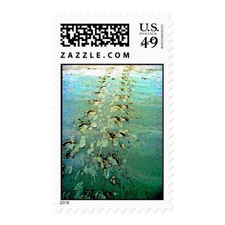 La tortuga de mar sigue sellos