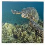 La tortuga de mar verde, (los mydas del Chelonia), Azulejo Ceramica