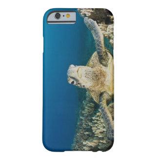 La tortuga de mar verde, (los mydas del Chelonia), Funda De iPhone 6 Barely There