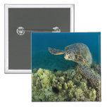 La tortuga de mar verde, (los mydas del Chelonia), Pin Cuadrado