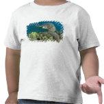 La tortuga de mar verde, (los mydas del Chelonia), Camisetas