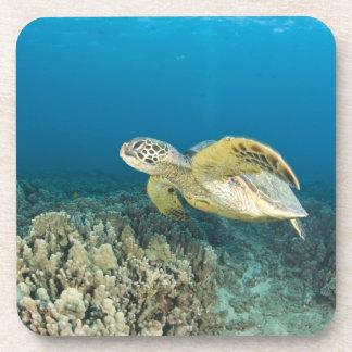 La tortuga de mar verde, (los mydas del Chelonia), Posavaso