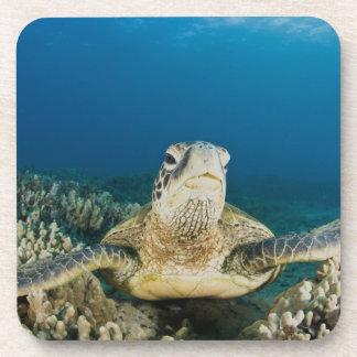 La tortuga de mar verde, (los mydas del Chelonia), Posavasos De Bebida