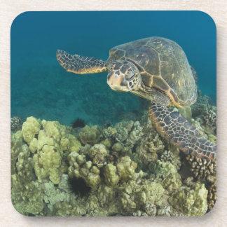 La tortuga de mar verde, (los mydas del Chelonia), Posavasos
