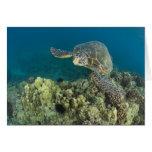 La tortuga de mar verde, (los mydas del Chelonia), Tarjeton