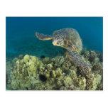 La tortuga de mar verde, (los mydas del Chelonia), Postales