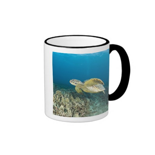 La tortuga de mar verde, (los mydas del Chelonia), Taza De Café
