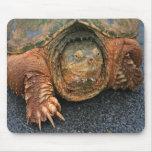 """La tortuga de rotura """"tiene cojín de ratón de un d alfombrillas de raton"""