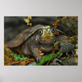 La tortuga más linda Evaaar, DiDi Póster