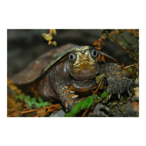 La tortuga más linda Evaaar, DiDi Poster