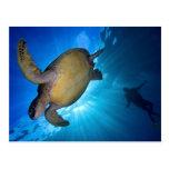 La tortuga y el buceador de mar postal