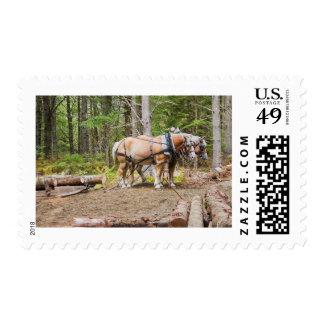 La tracción de los caballos abre una sesión las sello