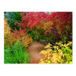 La trayectoria del otoño tarjetas postales