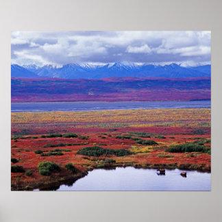 La tundra del parque nacional de Denali a finales  Posters