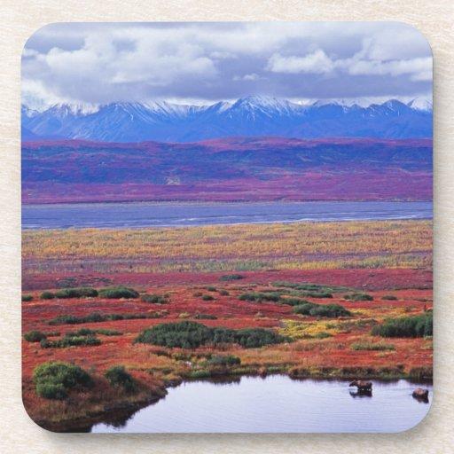 La tundra del parque nacional de Denali a finales  Posavaso