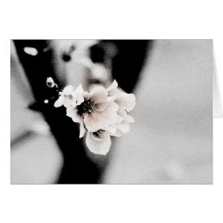 La última fotografía floral de la primavera el felicitación