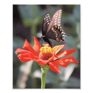 La una fotografía dramática de la mariposa cojinete
