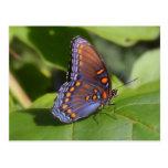 """La una"" fotografía orgullosa de la mariposa Tarjetas Postales"