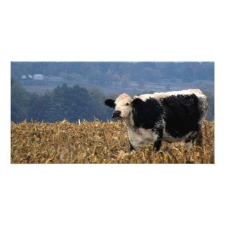 La vaca blanco y negro pasta en campo tarjeta fotografica personalizada