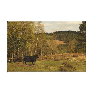 La vaca de Dexter admira las colinas de Hednesford Impresion De Lienzo