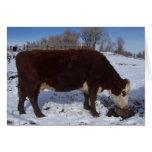 La vaca de enero en la sal se lame tarjeta de felicitación