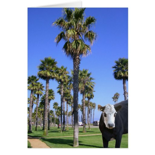 La vaca visita Santa Barbara Tarjeton