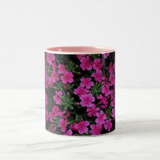 La verbena rosada florece la taza