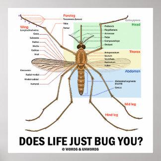 ¿La vida apenas le fastidia Anatomía del mosquit Poster