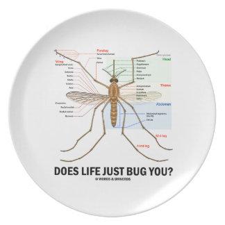 ¿La vida apenas le fastidia? (Anatomía del mosquit Platos