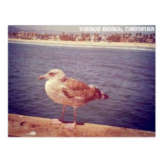 la vida de una gaviota tarjetas postales